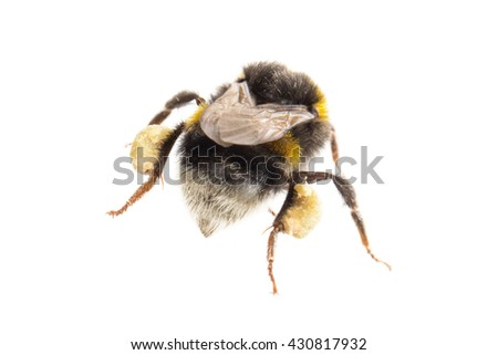 Small bee, isolated on a white background - stock photo
