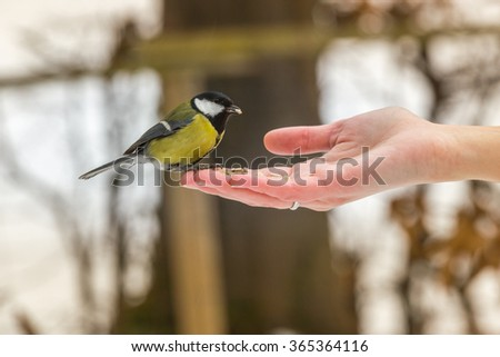 Small bird sitting on a woman's hand with a sunflower seed in a beak, feeding. - stock photo