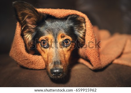 Scared Dog Stock Images Royalty Free Images Amp Vectors