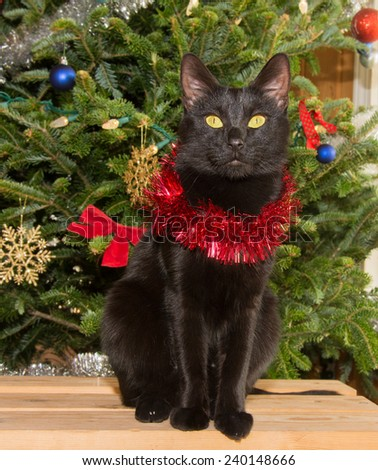 Small black cat in front of a Christmas tree, wearing red tinsel around her neck - stock photo