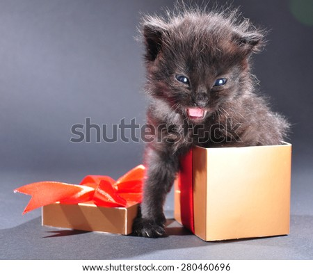 Small black kitten in present gist box. Isolated on dark background. Studio shot. - stock photo