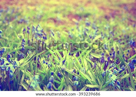 small blue spring flowers - stock photo