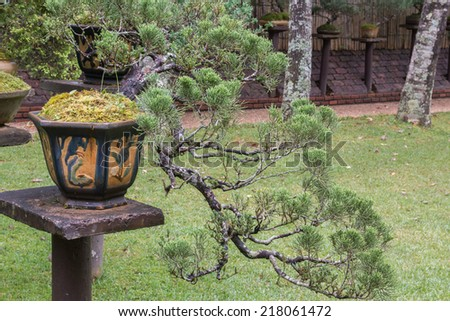 Small bonsai garden look fresh and beautiful. - stock photo