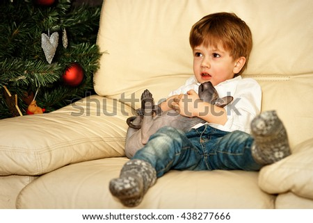 Small boy on the sofa at the Christmas tree. Holding sphinx cat.
