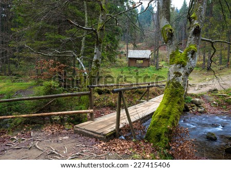 Small  bridge over the river in the forest