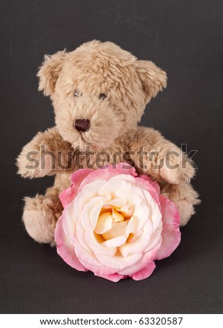 Small Brown Bear with White and Pink Rose - stock photo