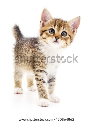 Small brown kitten isolated on white background. - stock photo