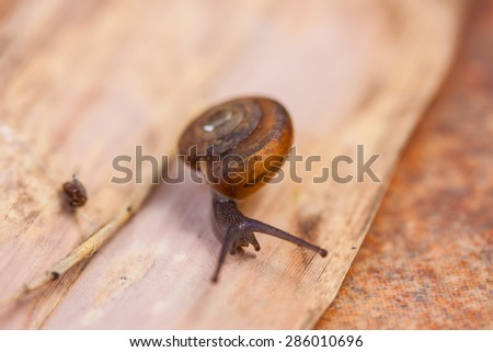 small brown snail on leaves - stock photo