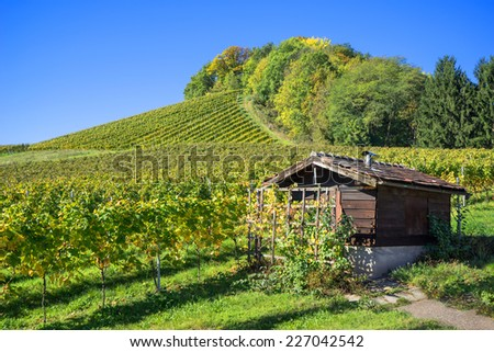 Small brown, wooden hut in a vineyard on a sunny autumn day   - stock photo