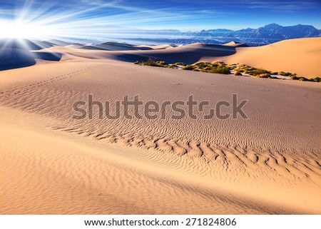 Small bushes grow between the barkhans.  Orange light in the morning over sand dunes. Mesquite Flat Sand Dunes in Death Valley - stock photo