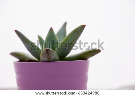 Small cactus pink flower pot white stock photo royalty free small cactus in pink flower pot white background mightylinksfo