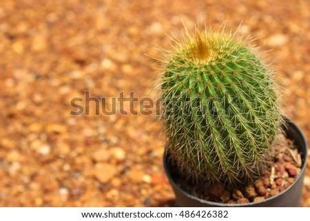 Small cactus in pot with background is gravel.