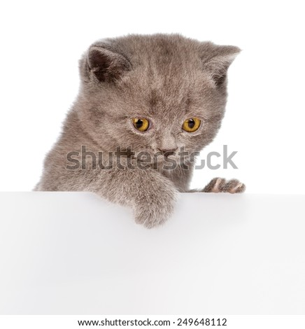 small cat peeking from behind empty board. isolated on white background - stock photo