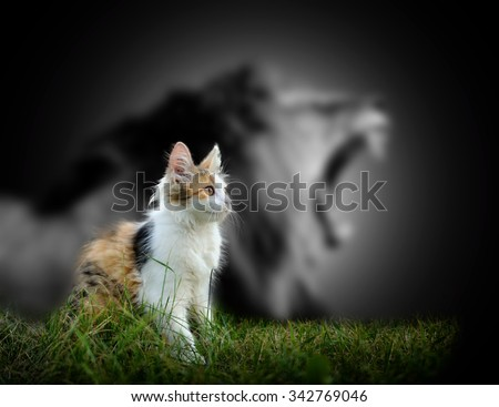 Small cat with big angry male lion shadow - stock photo
