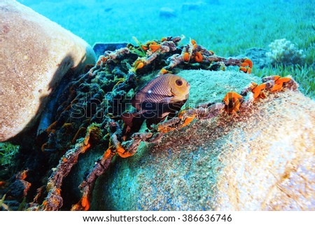 small coral fish underwater - stock photo