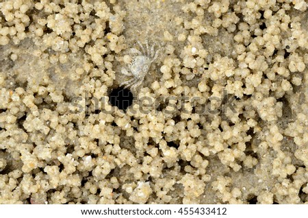 Small crab is excavating sand to make a house hole on the sand beach  - stock photo