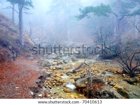 Small creek and wood in dense fogs - stock photo