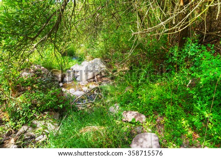 small creek in the forest in Sardinia, Italy