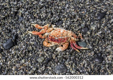 Small crushed crab