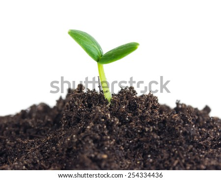 Small cucumber seedling in soil isolated on white background