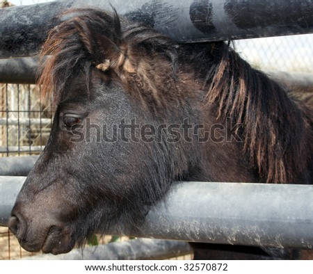 Small cute brown pony portrait