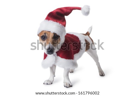 Small cute dog dressed as Santa Claus in a red cap and coat with white fur. Santa's little helper. White background. studio shot - stock photo