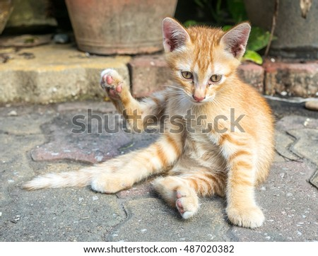 Small cute golden brown kitten lay on outdoor concrete floor with unusual posture under natural light, selective focus on its eye