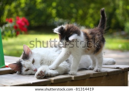 Small cute kitten and his mother - stock photo