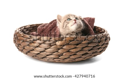 Small cute kitten in wicker basket, isolated on white - stock photo