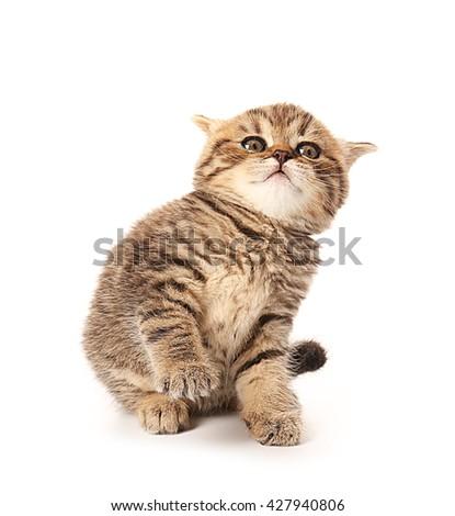 Small cute kitten, isolated on white - stock photo