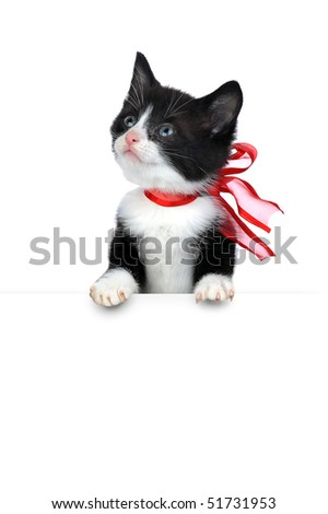 small cute kitten isolated on white