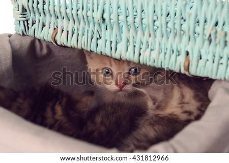 Small cute kittens in wicker basket - stock photo