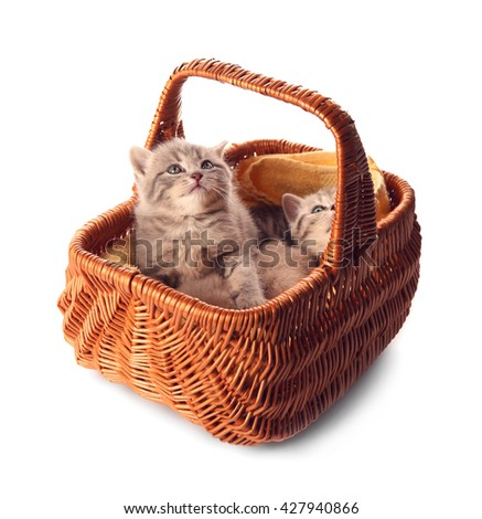 Small cute kittens in wicker basket, isolated on white - stock photo
