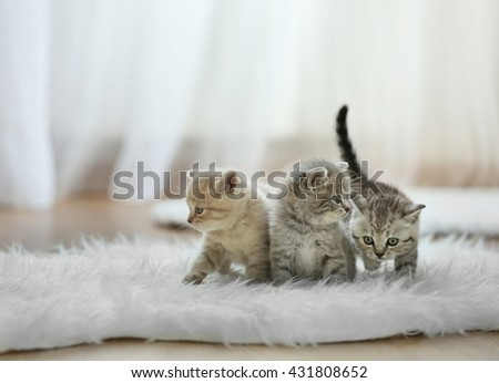 Small cute kittens on carpet - stock photo