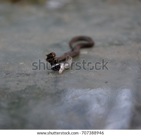 Small dead brown snake with open mouth, back inside, on table