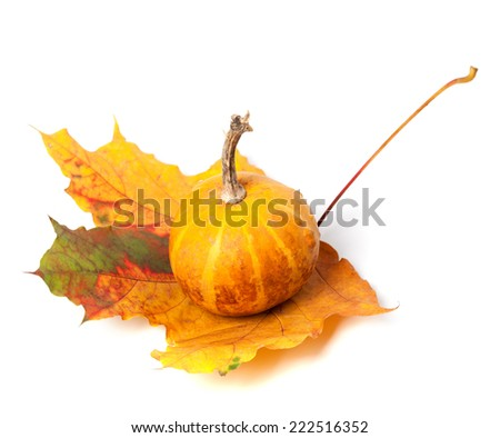 Small decorative pumpkin on autumn maple-leaf. Isolated on white background - stock photo