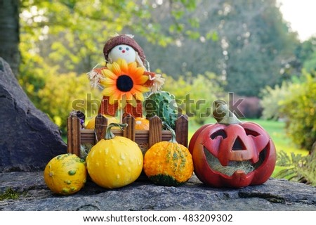 Small decorative pumpkins - as an autumn decoration for Halloween