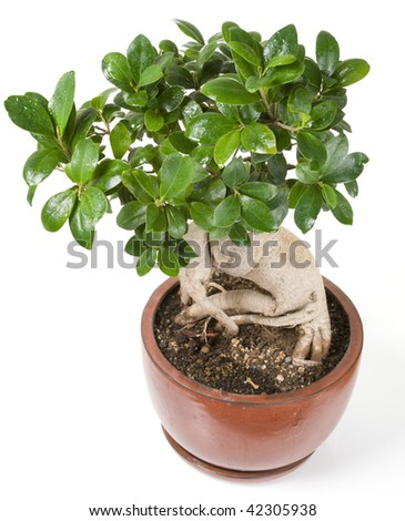 Small decorative tree in pot on white background