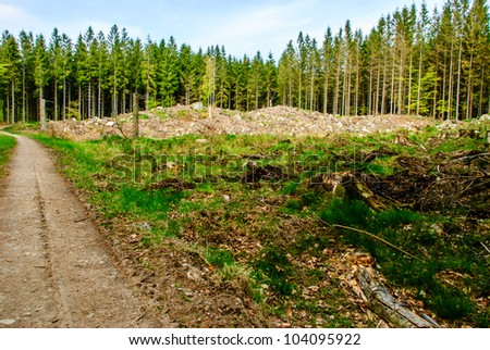 Small deforestation area beside dirt road - stock photo