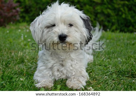 small dog in the meadow