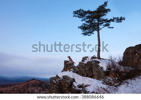 Small dog meets sunrise at rock near a pine tree - stock photo