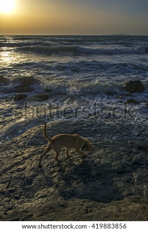 Small dog on the beach at sunset - stock photo