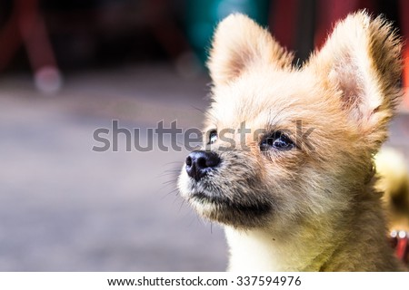 small dog sick - stock photo