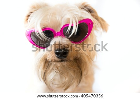 Small dog with heart shaped sunglasses on a white background