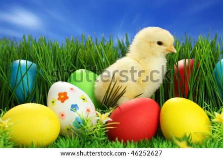 Small easter chick, on blue background