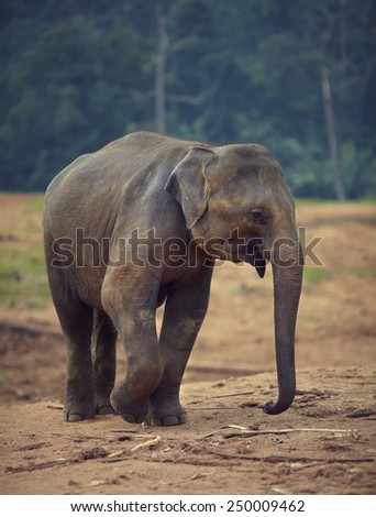 Small elephant on blurred background - stock photo