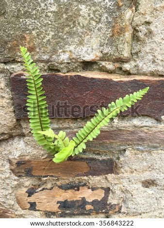 Small fern growing on vertical rock wall