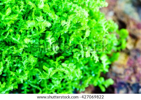 Small fern leaves close up background - stock photo