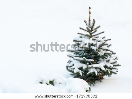 Small fir tree, covered with snow in winter day - stock photo