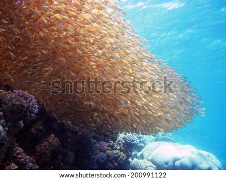 Small fish wave - stock photo
